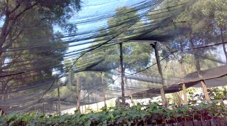 Mallas para jard n hydro environment - Mallas para jardin ...