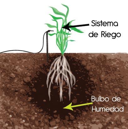 Gu a instalaci n de riego localizado hydro environment hidroponia en mexico - Aparato para la humedad ...