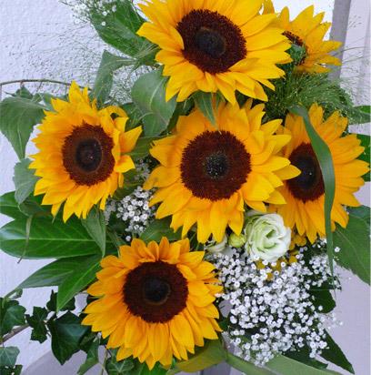 Gu a para cultivar flores ornamentales hydro for Plantas ornamentales con flores