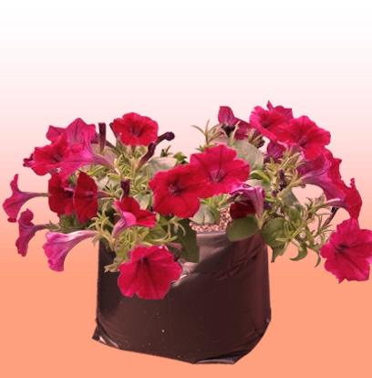 Requerimientos de las flores hydro environment - Plantas que aguantan temperaturas extremas ...