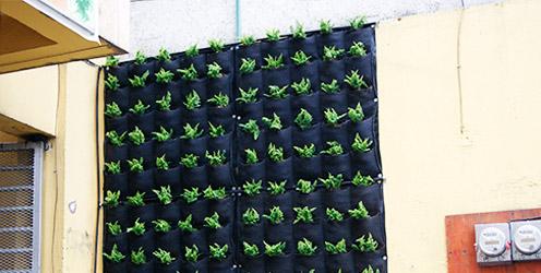 Instalaci n de un muro verde hydro environment for Materiales para un muro verde