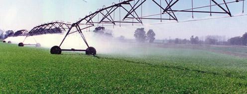 Gu a cultivo de ma z 2da parte hydro environment for Sembrar maiz y frijol juntos