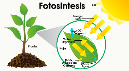 Gu a la luz en tus plantas hydro environment for Porque son importantes los arboles wikipedia